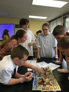 squid dissection at st marys school